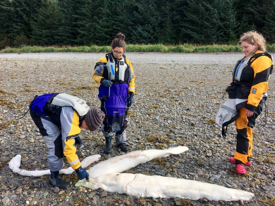 На пляжі Аляски рибалка виявив загадкову істоту