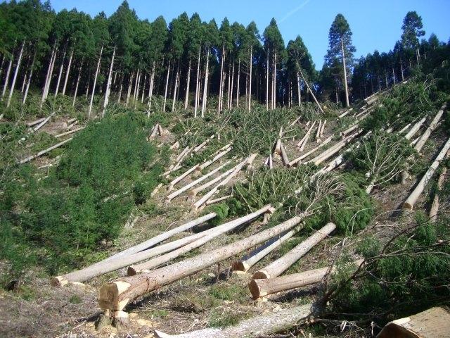 Місія Євросоюзу допоможе Україні в реформуванні системи управління лісовим господарством