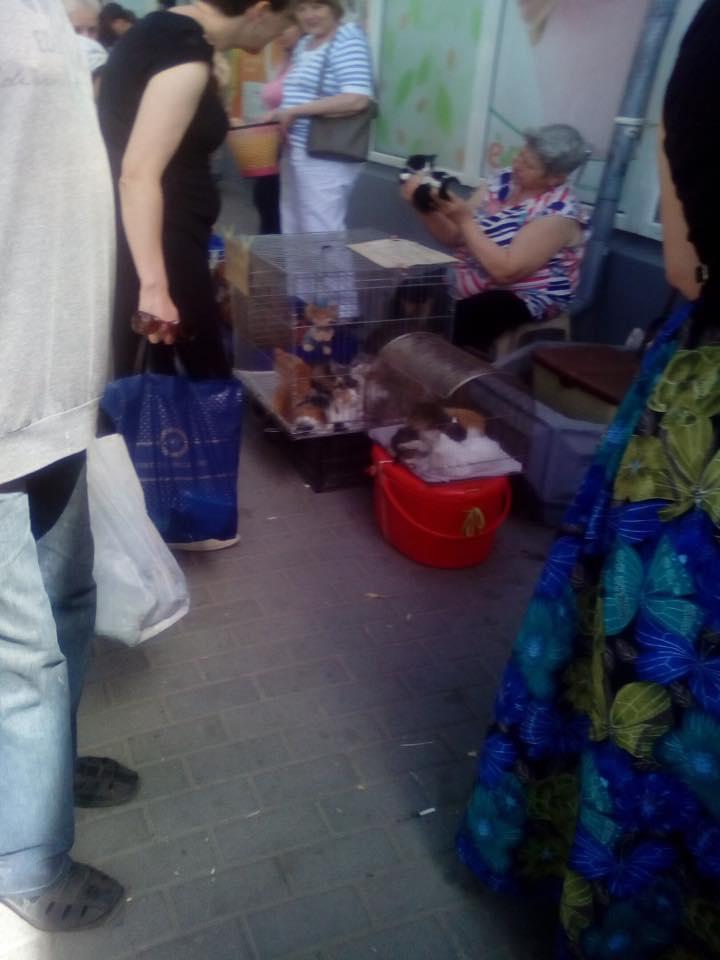Нечувана жорстокість: запоріжанка приймає щенят, передає їх бомжам, щоб з'їли
