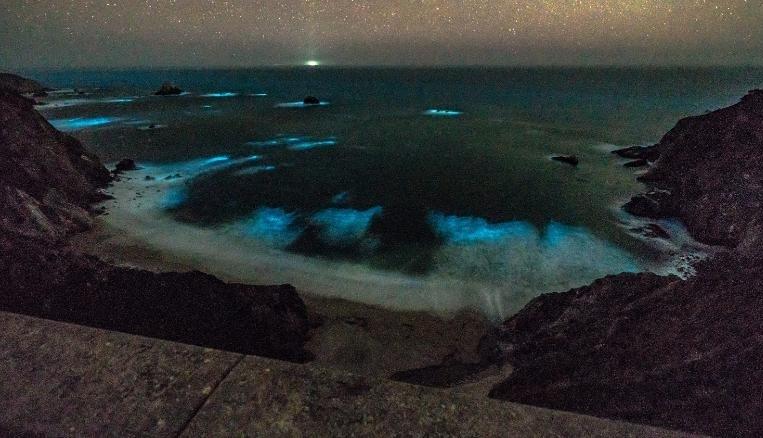 Біля узбережжя Каліфорнії засяяв океан (фото)