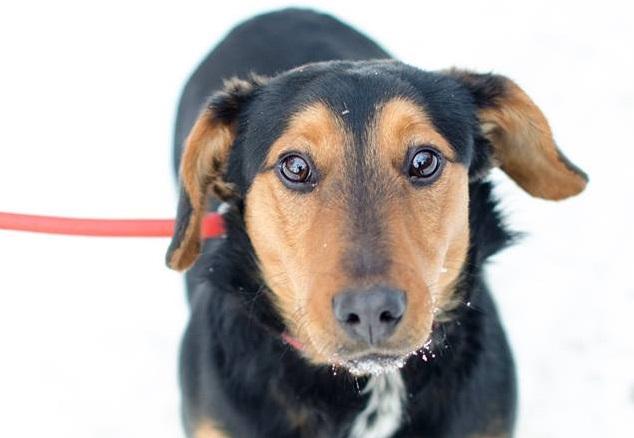 У Львові відбудеться захід «Поглянемо на світ очима собаки»