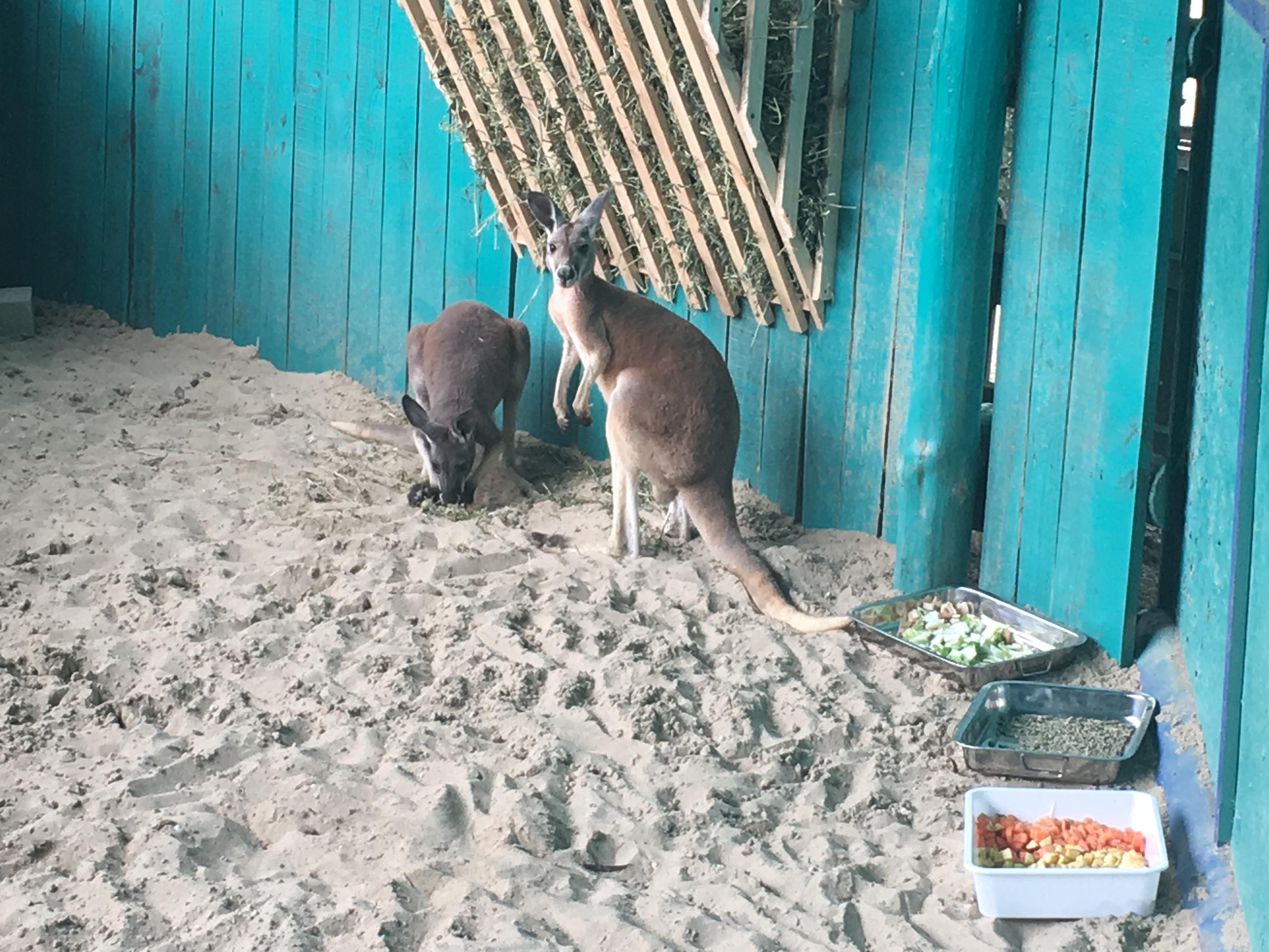 В бердянский зоопарк привезли уникальных животных