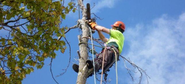 Фірма, яка повинна звалити дерева, отримає ще 8 мільйонів з бюджету