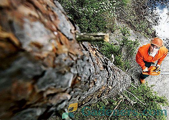 Запорізький завод видалить 97 дерев, щоб побудувати стоянку