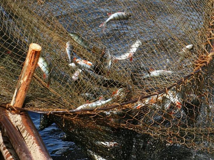 Азовське море продовжують знищувати попри масові затримання риболовецьких суден