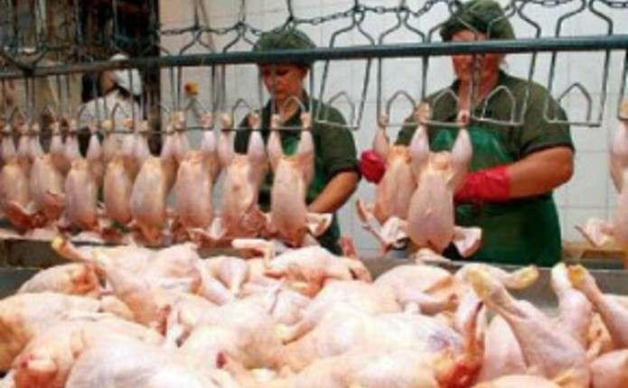 Своїм шляхом: Україна стала топ-експортером курей та яєць в ОАЕ