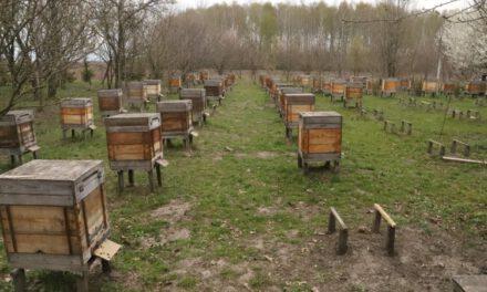 У Запорізькій області масово гинуть бджоли