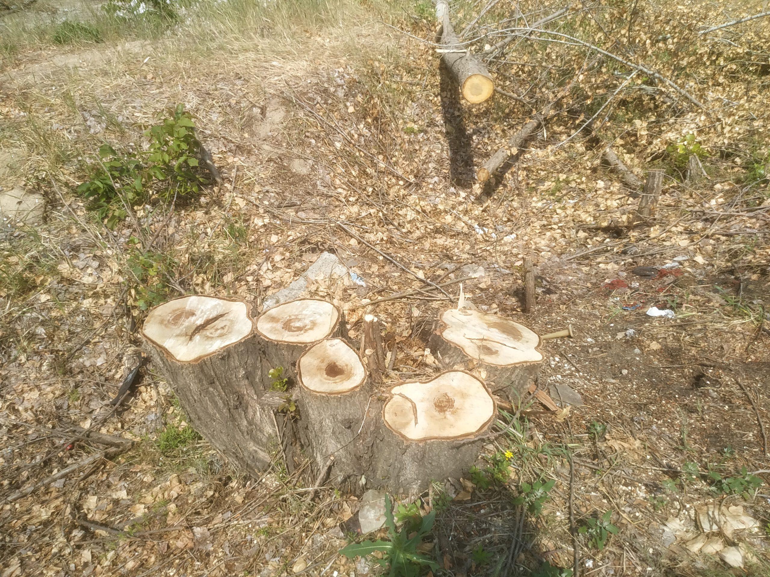 Поліція порушила кримінальну справу по факту вирубки дерев у спальному районі Запоріжжя