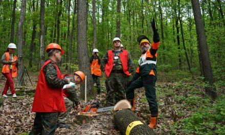 У спальному районі Запоріжжя планують видалити майже півтори тисячі дерев
