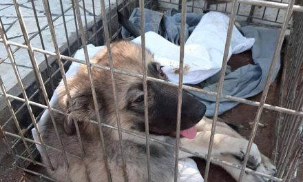 На Запоріжжі собаку викинули з мосту, в нього зламані чотири лапи (фото, відео)