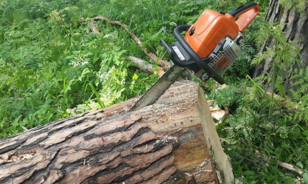 Поблизу Дубовки в Запоріжжі з'являться нові багатоповерхівки, для цього зрубають дерева