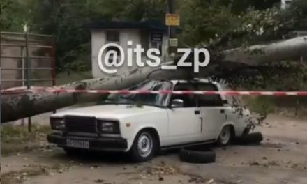 У центральній частині Запоріжжя дерево впало на автомобіль – відео