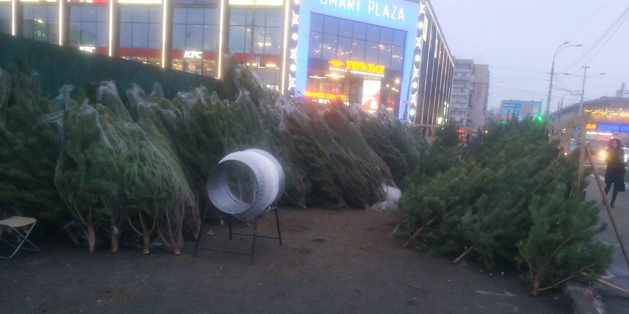 У Києві запрацювали ялинкові базари – вартість