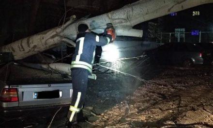У Запоріжжі сильний вітер повалив декілька дерев – є постраждалі (фото)