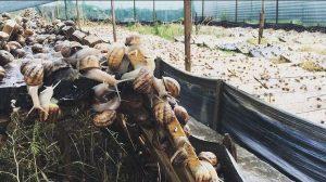 скуштувати равликів равлики Запоріжжя