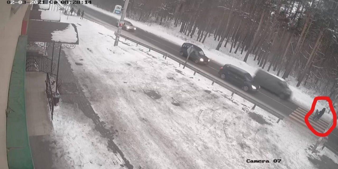 У Києві на пішохідному переході водій на швидкості ледь не збив вагітну жінку з дитиною – відео