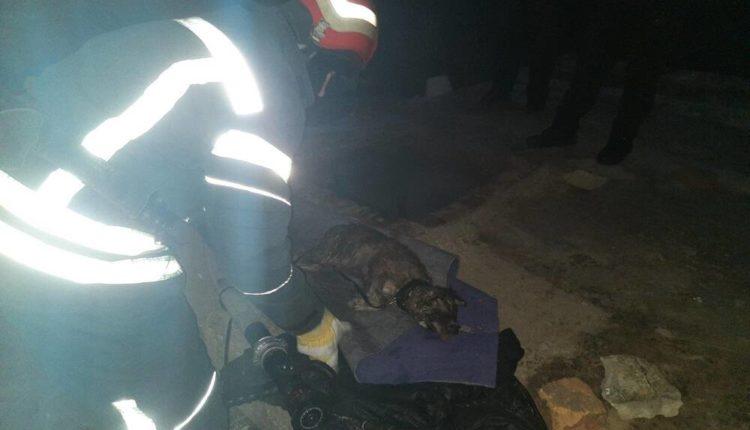 На Запоріжжі бійці ДСНС врятували цуценя – фото