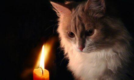 Сьогодні у Запоріжжі близько 40 будинків відключать від електроенергії – адреси