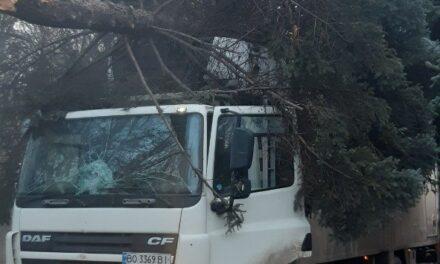 У Запоріжжі фура знесла дерево та застрягла на трамвайній колії