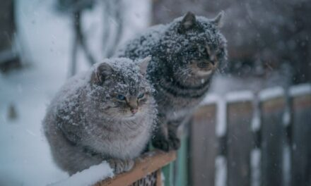 Зима не відступає: запоріжців попереджають про погіршання погоди