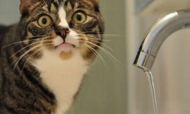 Завтра дитяча поліклініка, ТЦ, будинки у Запоріжжі залишаться без води – адреси