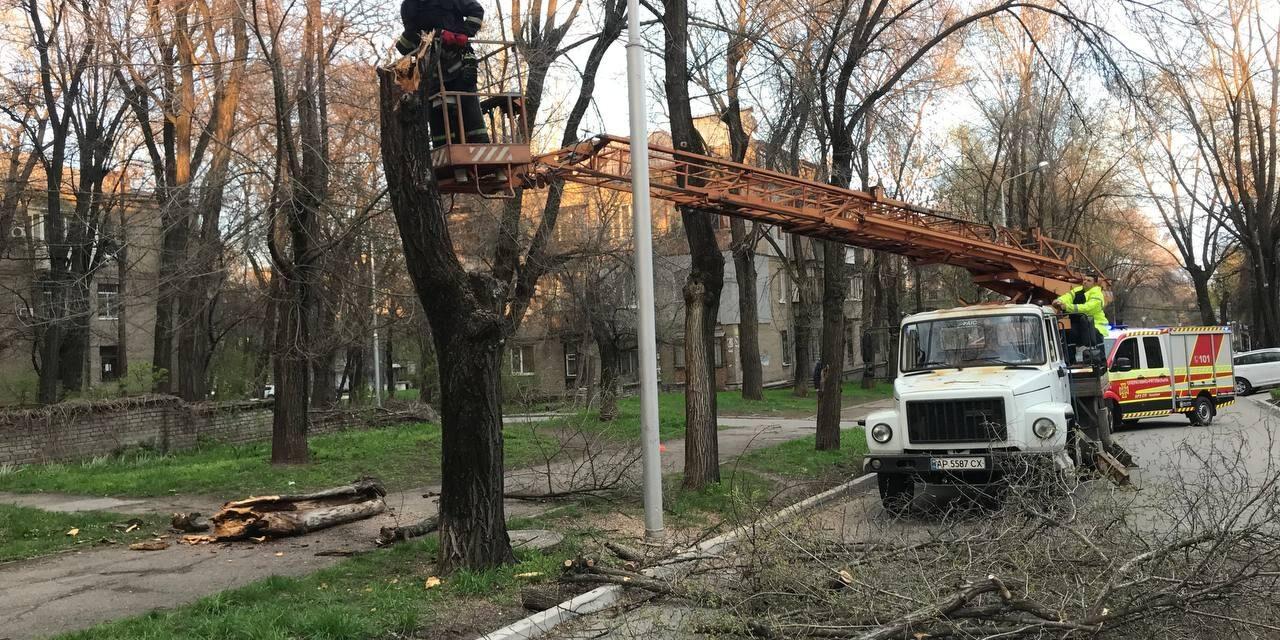 У центрі Запоріжжя впало старе дерево