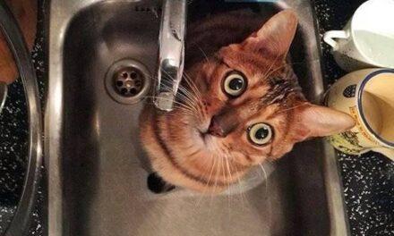 Частина Запоріжжя залишиться без води – адреси