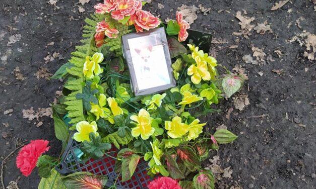 У Запоріжжі лісосмуга перетворилась на несанкціоноване кладовище домашніх тварин – фото