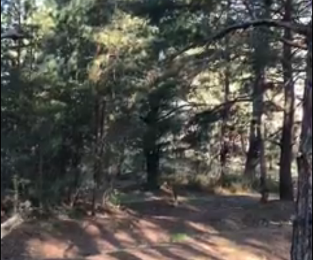 Гендиректор Національного заповідника «Хортиця» показав запоріжцям, як з користю проводити карантин – відео