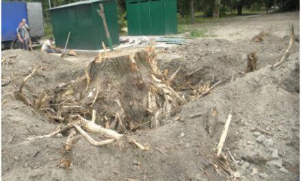 На Преображенського у Запоріжжі хочуть дозволити зрубати кілька десятків дерев