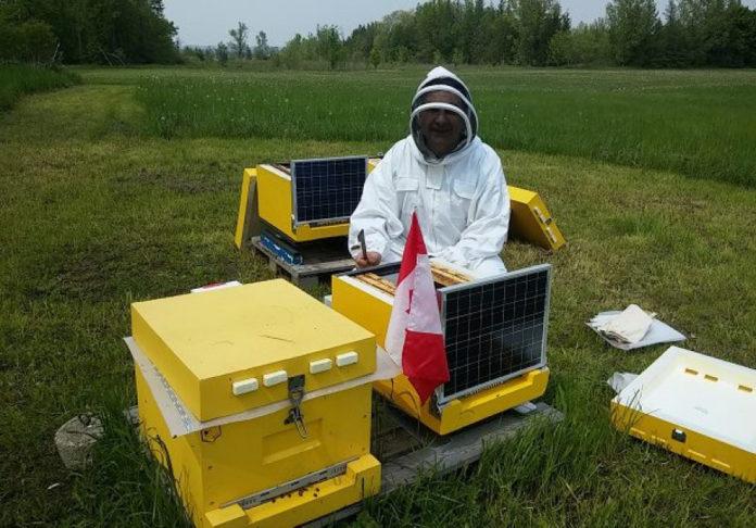 У Запорізькій області намагаються запобігти мору бджіл, як минулого року