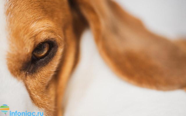 У дворі житлового будинку на Запоріжжі пристрелили чужу собаку
