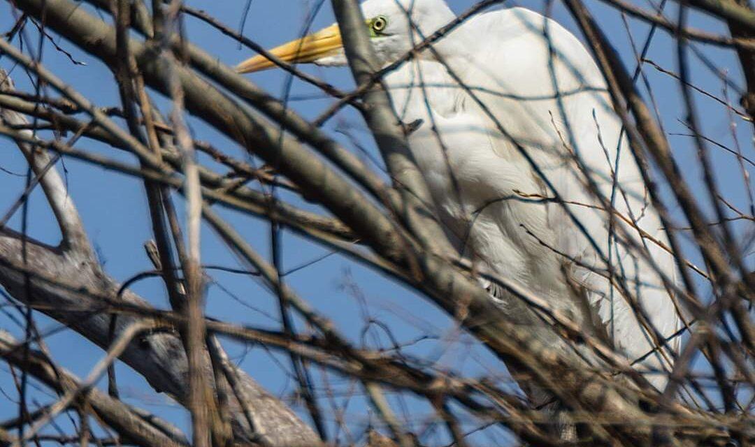 На о. Хортиця запорізький фотограф зафіксував рідкісного птаха – фото
