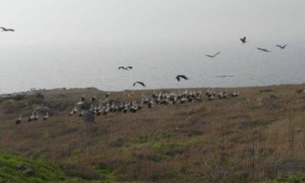Прикордонники зафіксували на острові Зміїному птахів-мігрантів – фото