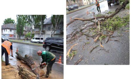 На проїжджу частину в Запоріжжі впало дерево