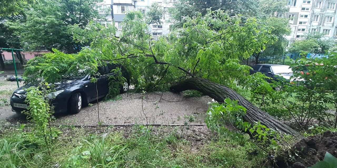 У Запоріжжі стихійне лихо, дерева падають на авто і чавлять їх – фото