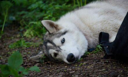 На Запоріжжі після смерті господаря собака живе на цвинтарі й дуже сумує