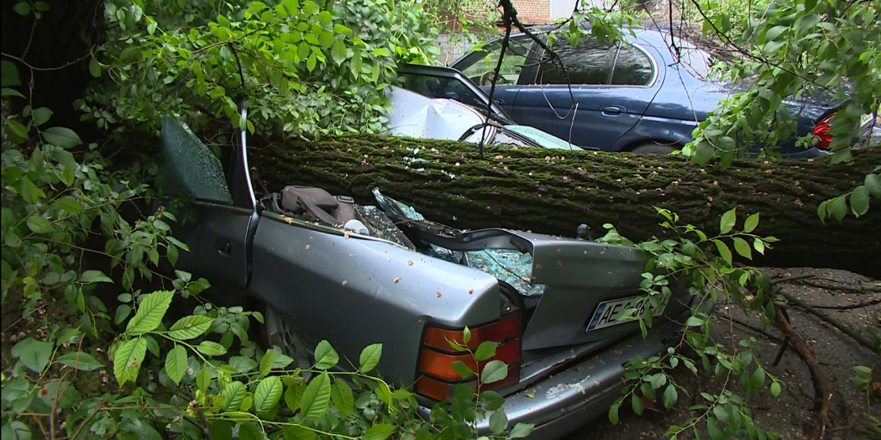 У центрі Запоріжжя впало величезне дерево й зруйнувало автомобіль – відео