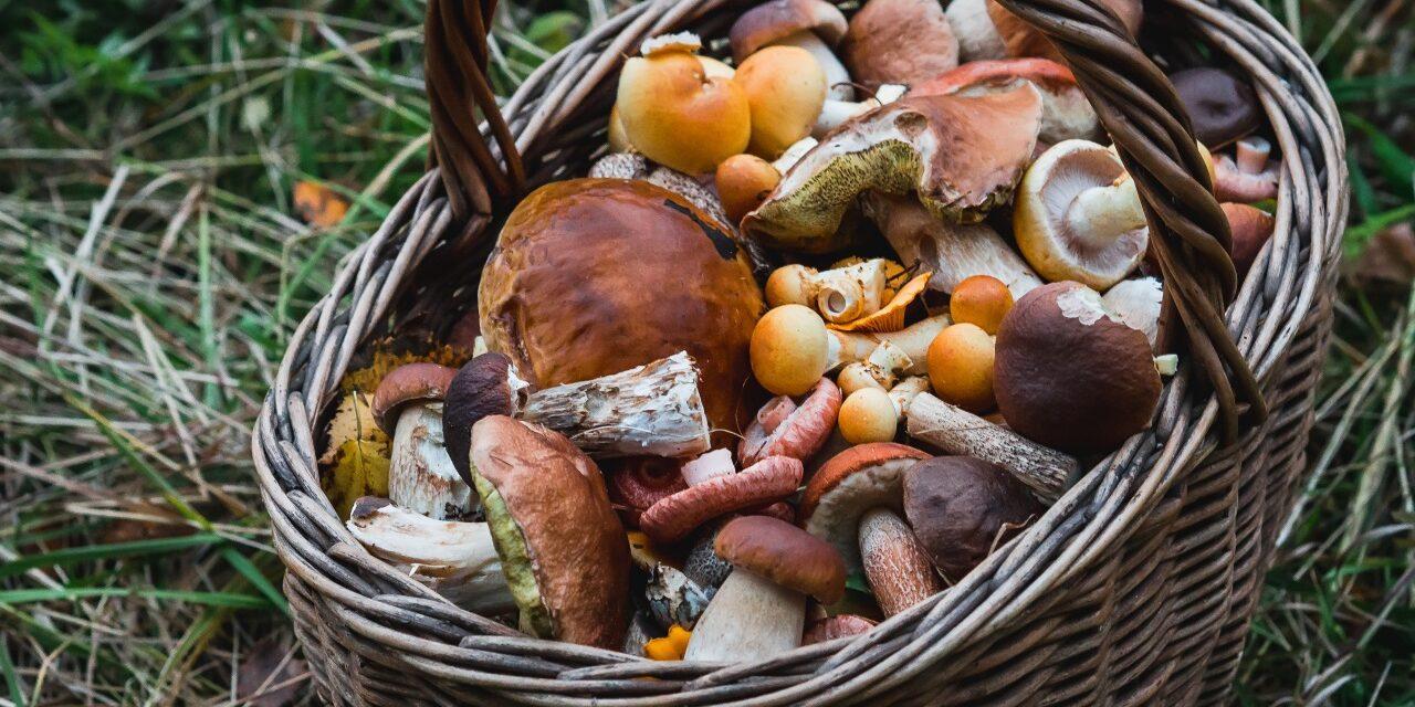 На Запоріжжі жінка отруїлась грибами, які зібрала біля житлових будинків