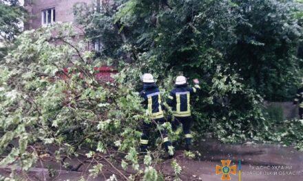 Рятувальники у Запоріжжі прибирають повалені негодою дерева – фото