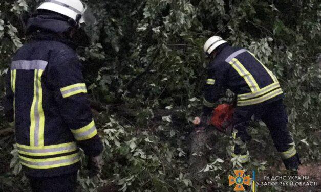 У Запоріжжі під час негоди дерево впало на трамвайну колію – відео