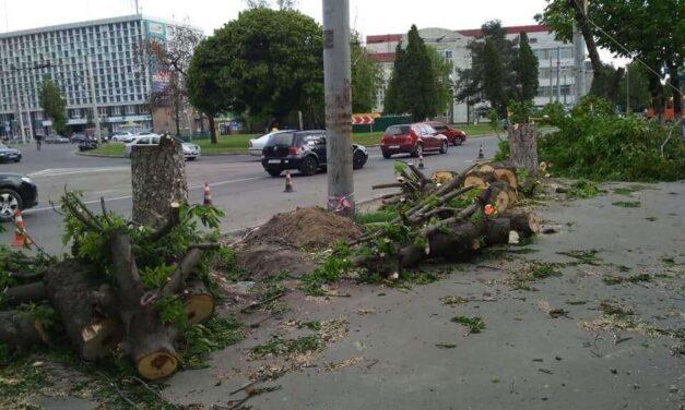 У Запоріжжі на Південному будуть різати дерева