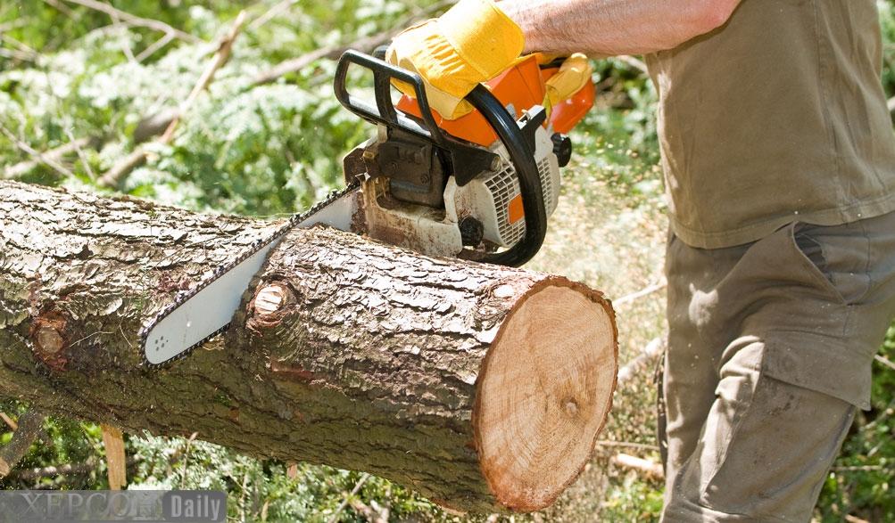 Майже сотню дерев зріжуть у центрі Запоріжжя заради ресторану