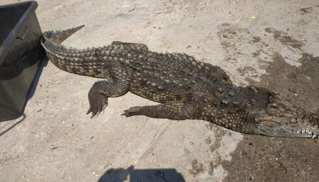 У Херсонській області зводоймивитягли крокодила – фото