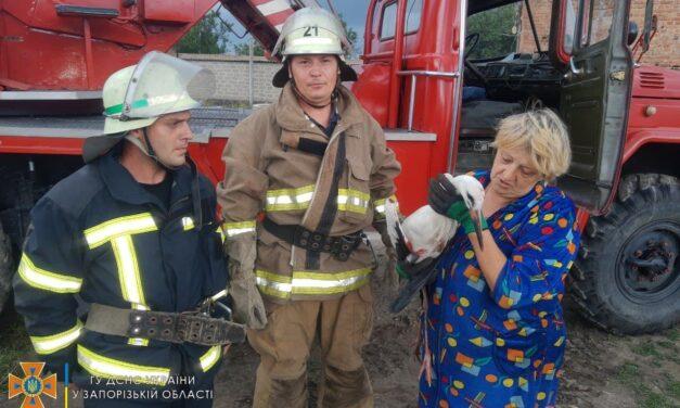 На Запоріжжі рятувальники знімали з водонапірної башти пташеня лелеки – фото