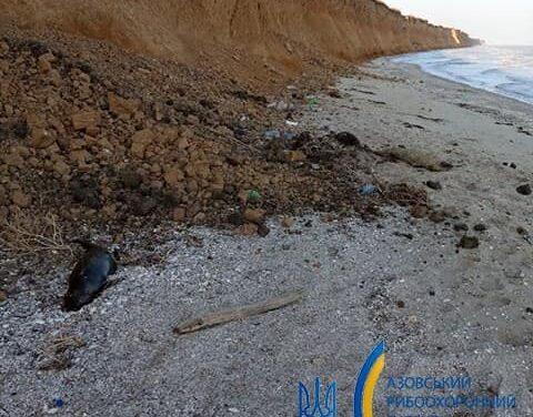 На березі Азовського моря в Запорізькій області виявили трьох мертвих дельфінів – фото