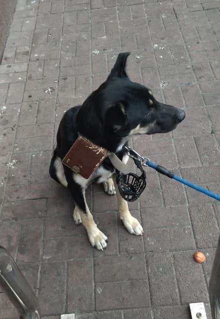 У Запоріжжі невідомі залишили собаку біля ТЦ, на ошийнику висіла записка і гроші – фото