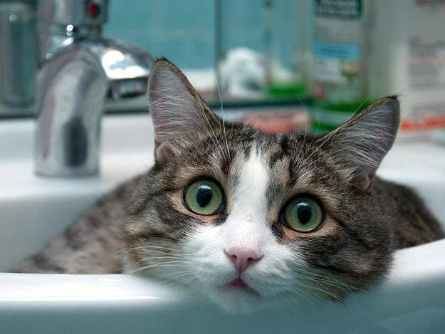 Наприкінці робочого тижня у Запоріжжі сотні будинків відключать від водопостачання – адреси