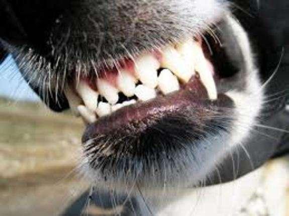 У Запоріжжі госпіталізували молоду жінку після нападу пса